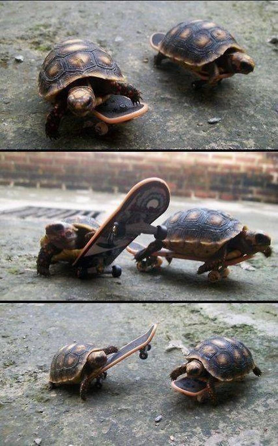 Картинки с черепахами прикол