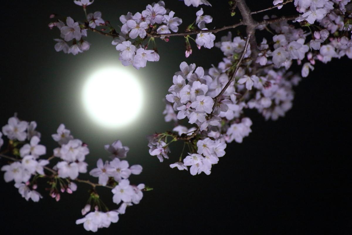 Фото очень красивых цветов луны