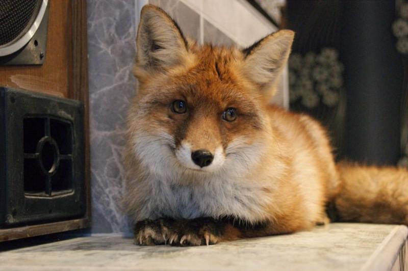 фото лисиц в домашних условиях украшения