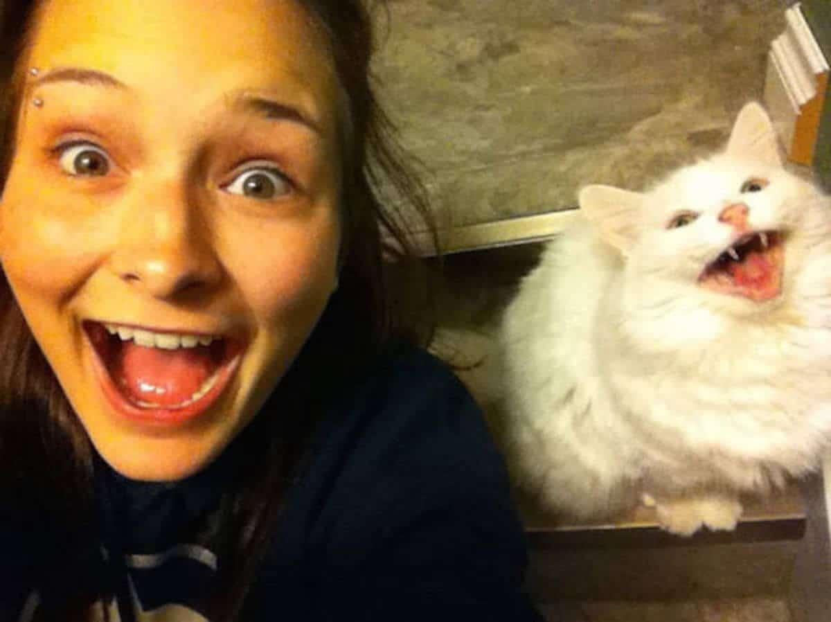 коты и их хозяева картинки фоне