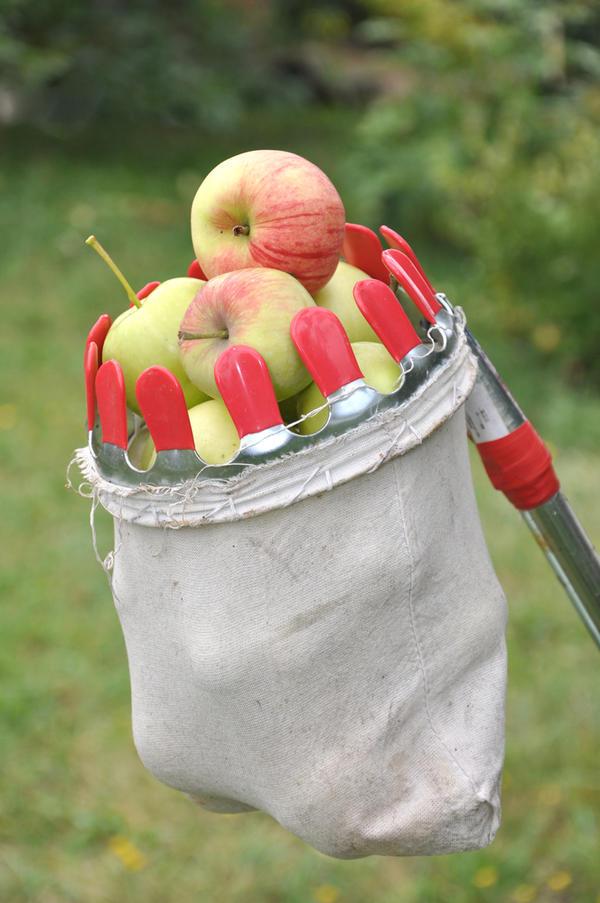 Своими руками для сбора яблок 571