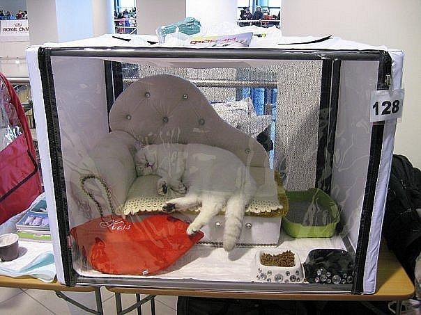 Палатка для кошек на выставку своими руками 14
