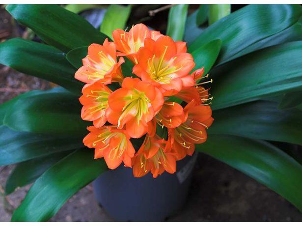 Самые красивые и неприхотливые комнатные цветы