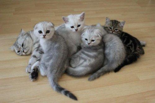 Молодые мамочки из мира животных (31 фото)
