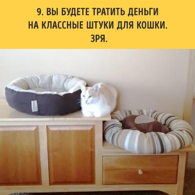 18 вещей, c которыми вы столкнетесь, когда заведете кошку