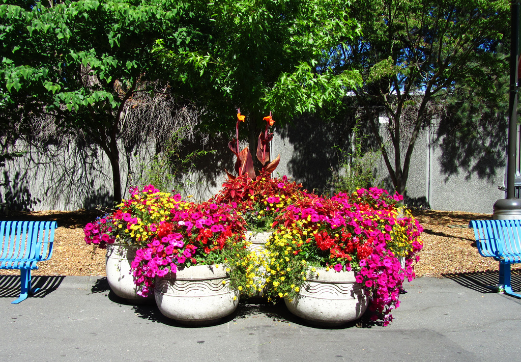 Цветы декоративные для улицы