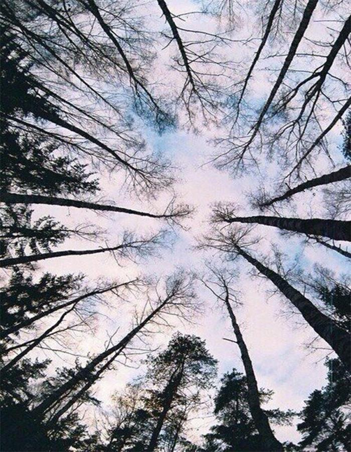 Деревья приморского края фото названия как суп