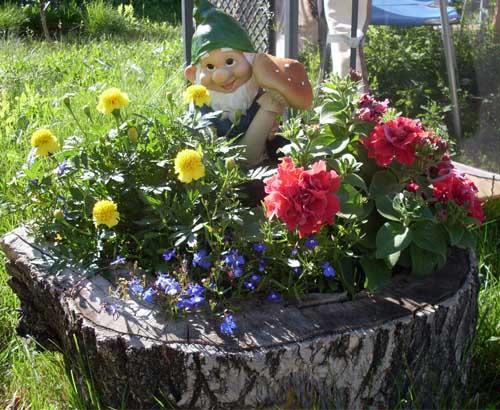 Красивое фото поля цветов