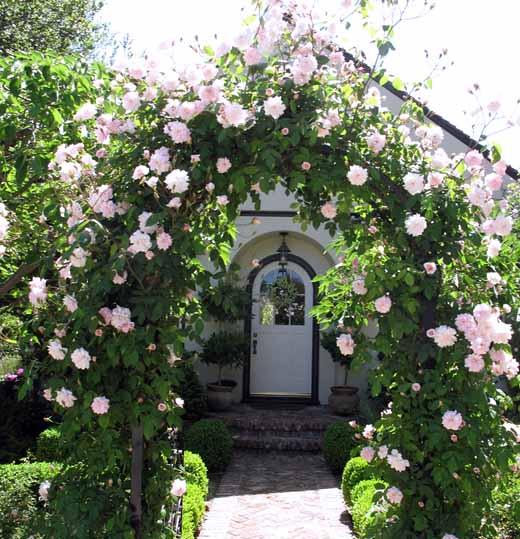 Как сделать арку для плетистых роз своими руками