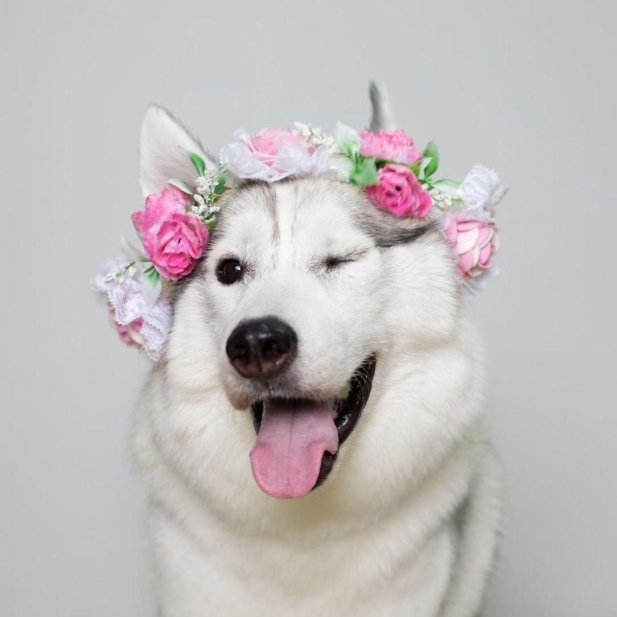 топовые картинки с собаками парня