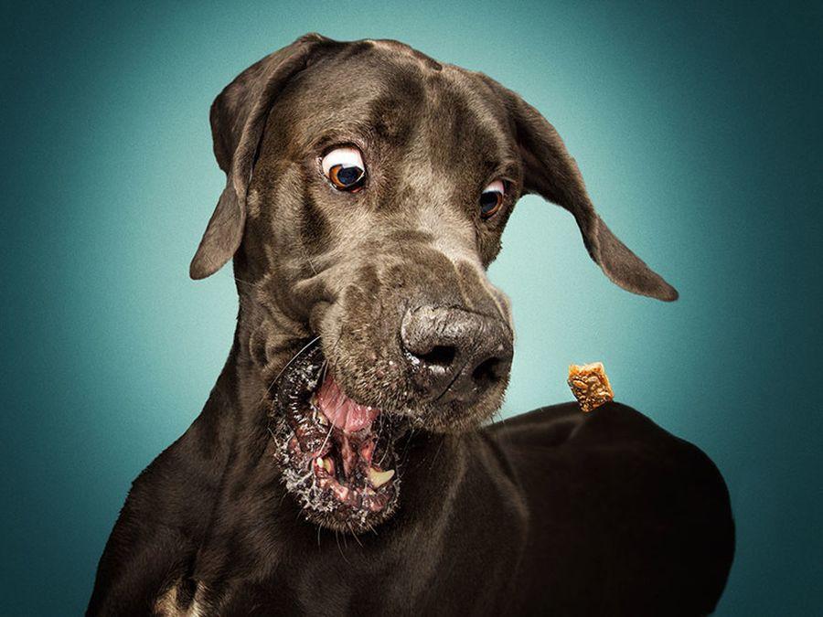 Открытки любимые, собаки прикольные картинки фото