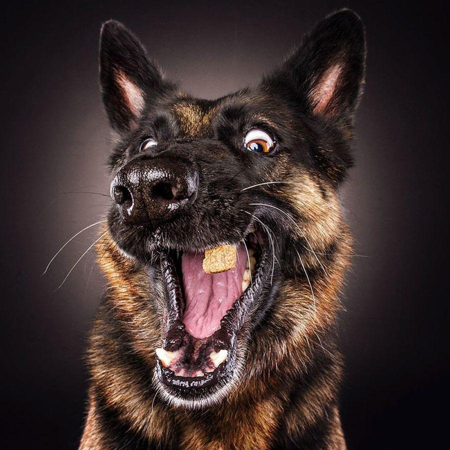 Лилии, смешные картинки с изображением собаки