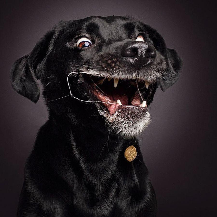Самые смешные собаки картинки