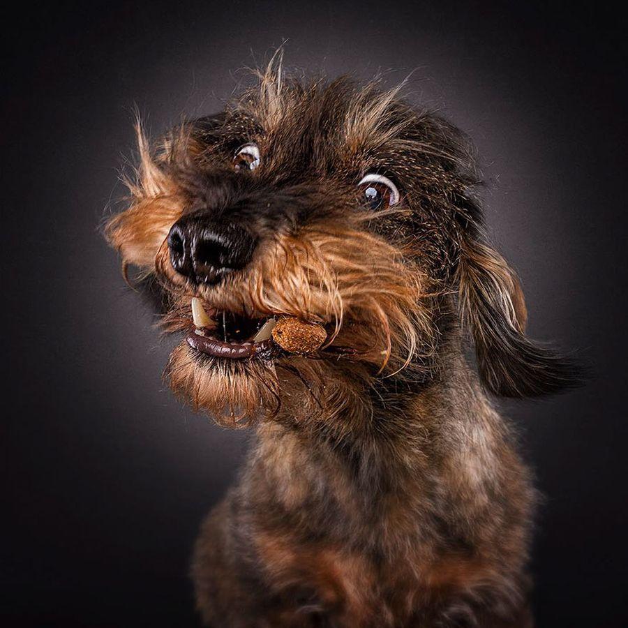 Приколы фото собак