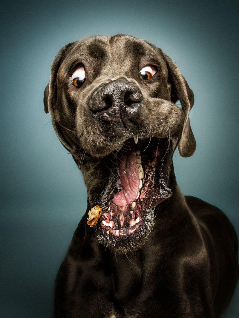Днем, прикол картинки с собаками