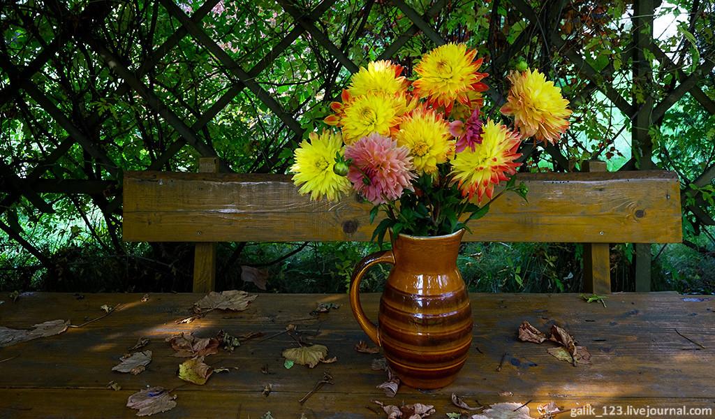 Запоздалые цветы картинки