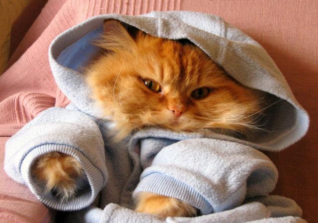 Бери сравнивает фото кошек в одежде важен