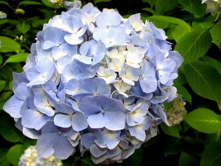 популярные садовые цветы фото и названия