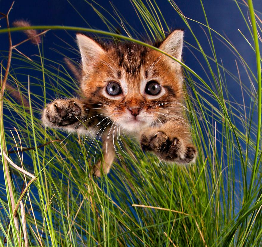 Котенок картинки смешные, картинки