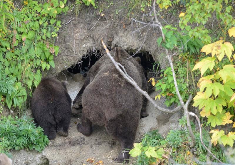 Что если ы занимаешься сексом с медведем фото 584-822