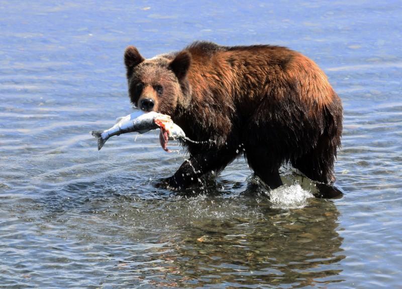 Что если ы занимаешься сексом с медведем фото 584-644