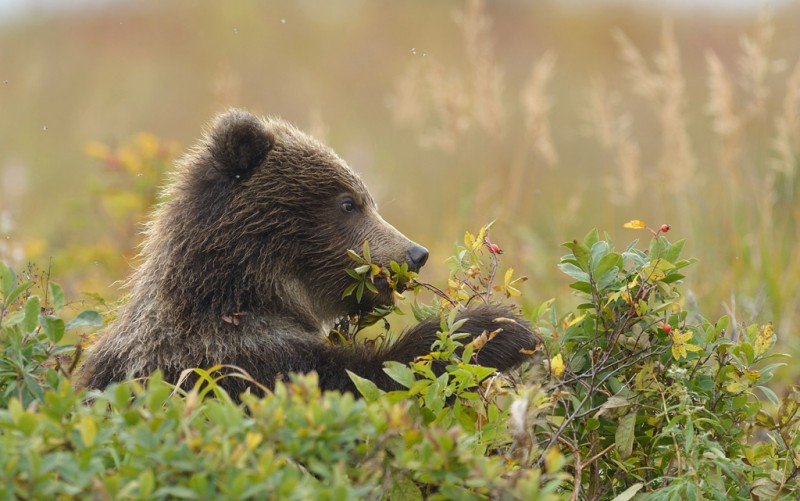 Что если ы занимаешься сексом с медведем фото 584-318
