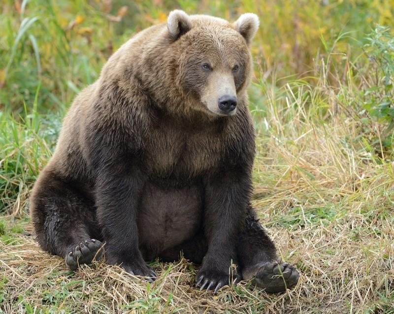 Что если ы занимаешься сексом с медведем фото 584-557