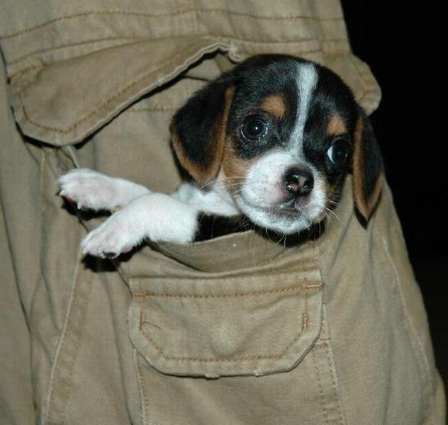 картинки с карманами собаками материалов выбирает свое