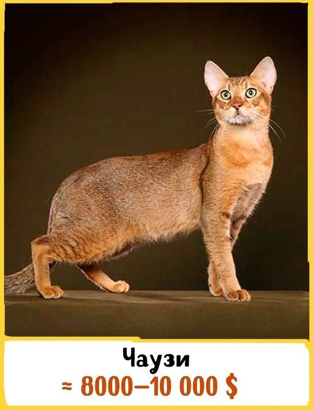 original 19 Шикарных кошек, которые стоят целое состояние