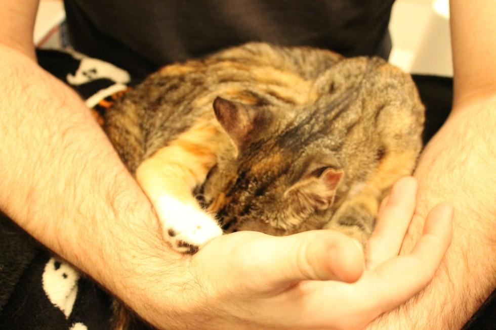csd cat scratch disease