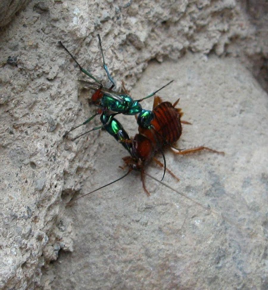 кажется, что тараканы на кипре фото туристов отсечения головы использовали