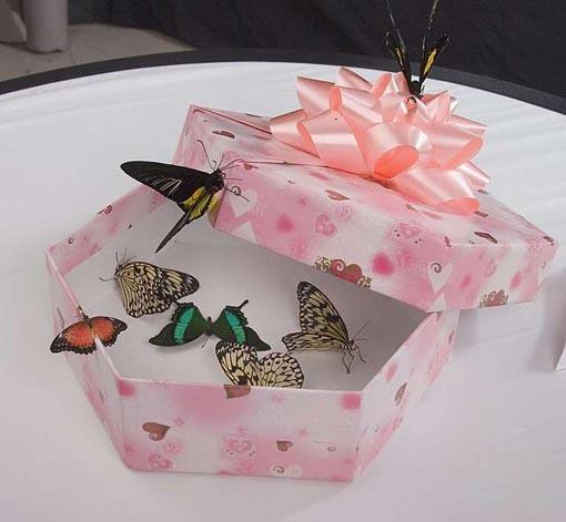 Коробка для бабочек своими руками 59