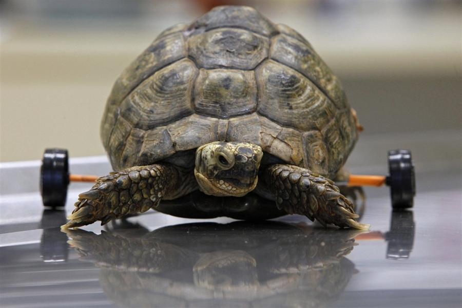 Прикольные картинки про черепаху, картинках анимашках картинки