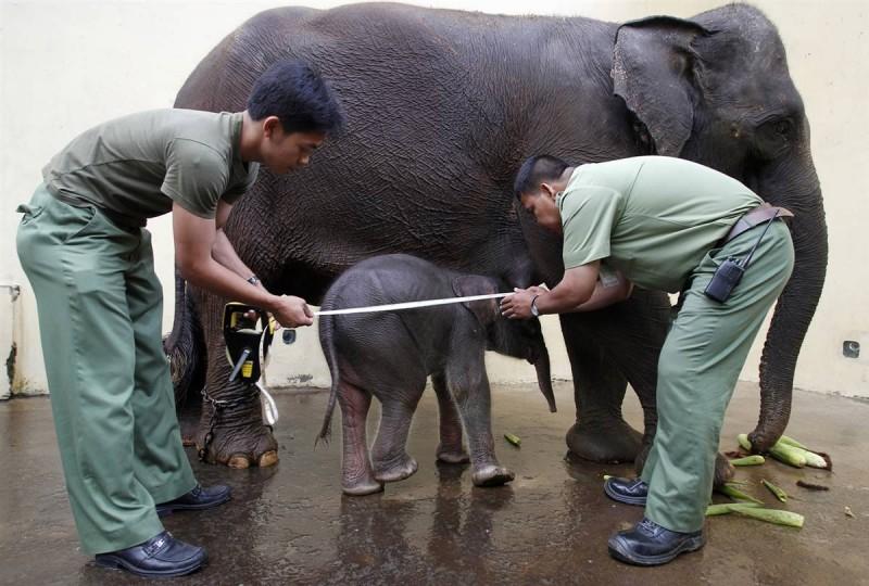 в очко слониху