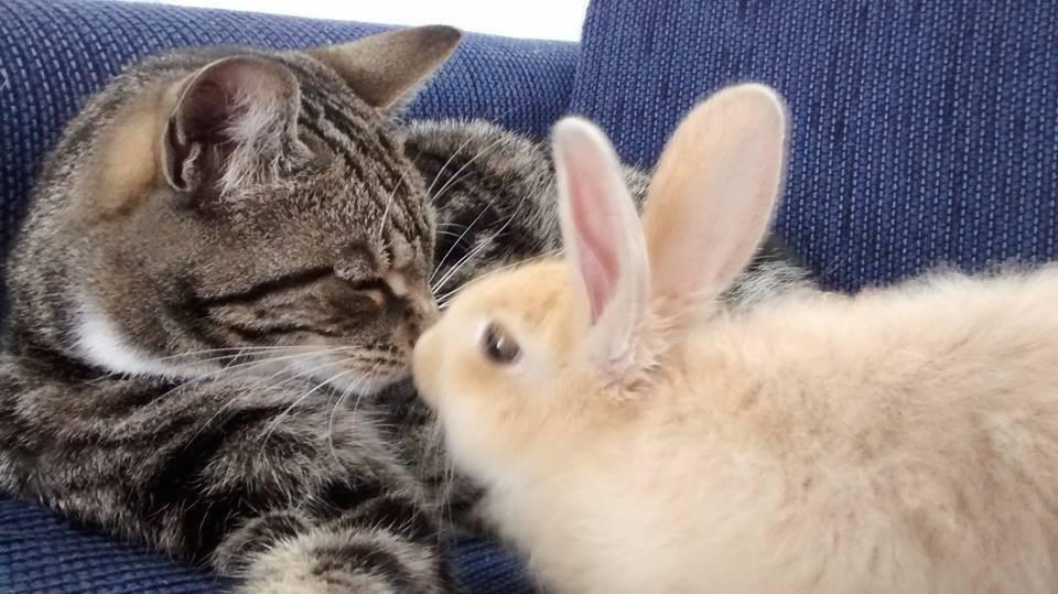 Фото кота зайца