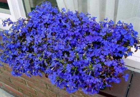 Открытка с большими цветами 679