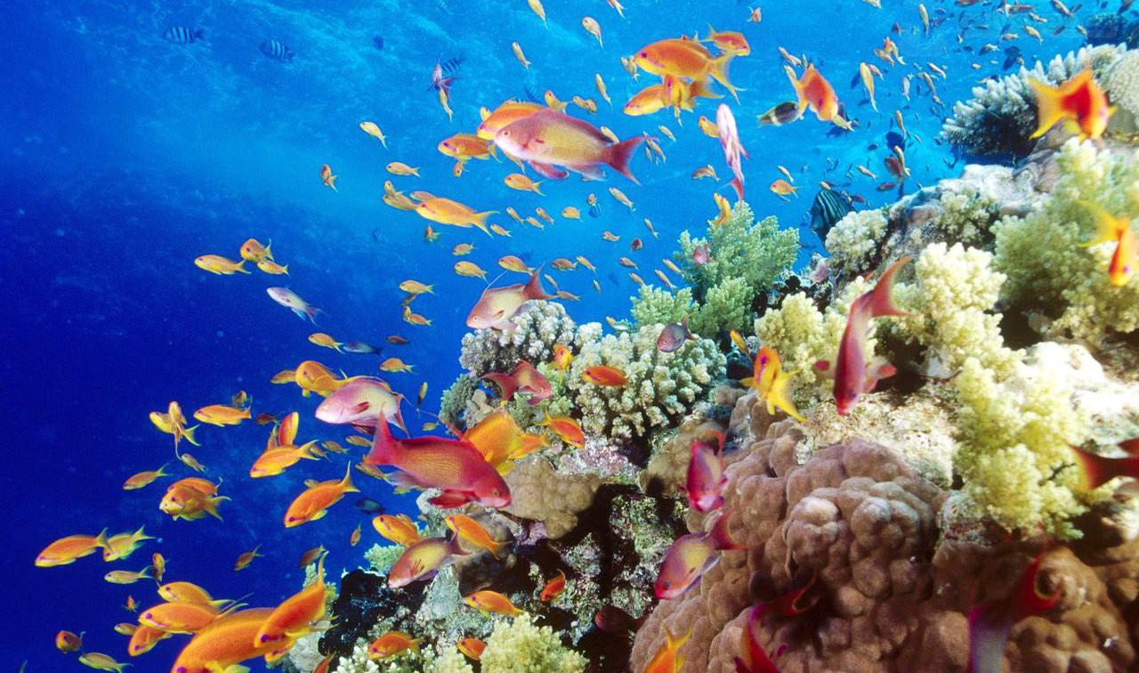 Un buzo encargado de fotografiar la fauna marina 99