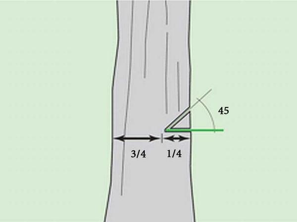 правильная валка дерева бензопилой