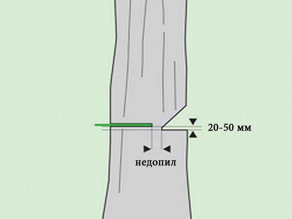 как свалить дерево в нужном направлении видео