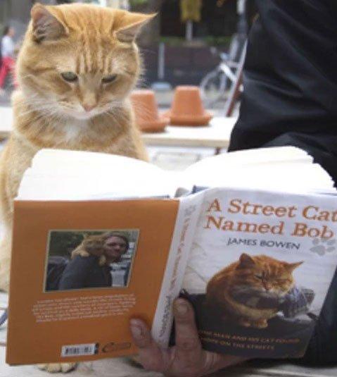 my street cat