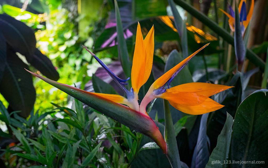 Фото экзотические цветы мира