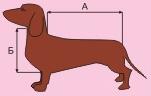 Выкройка переноски для собак своими руками