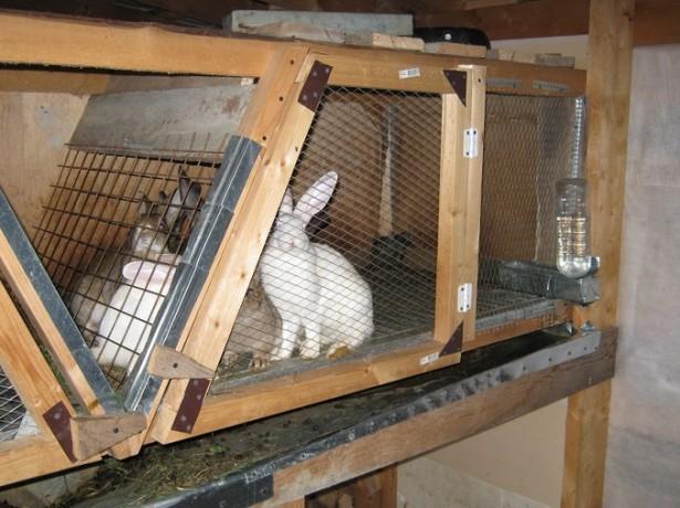 Клетка для самца кролика своими руками