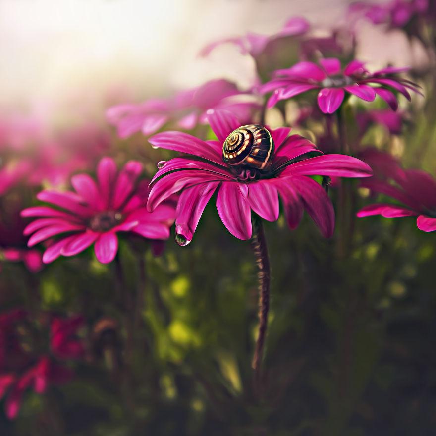 Фото макросъёмка цветы