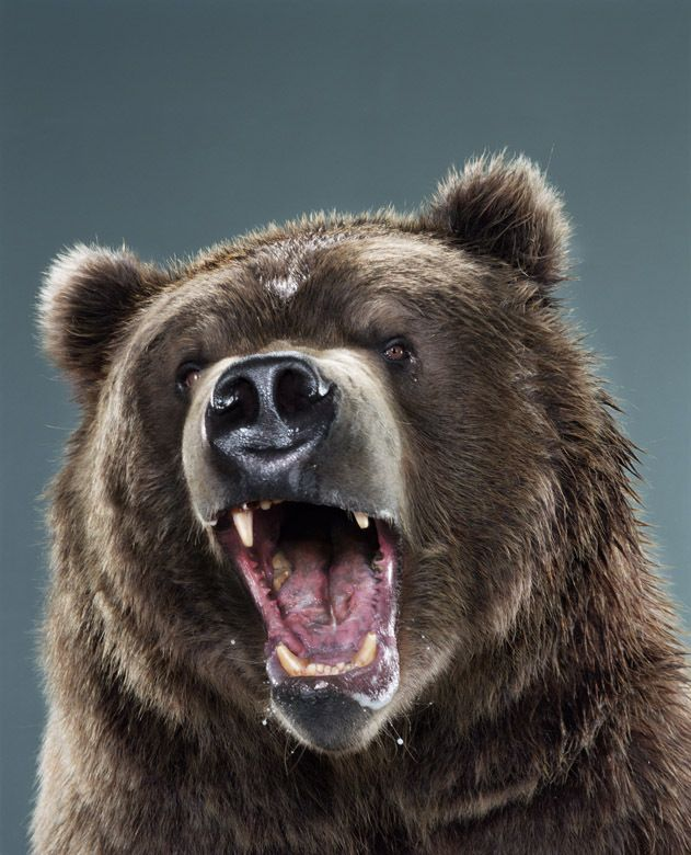 Пиво белый медведь фото