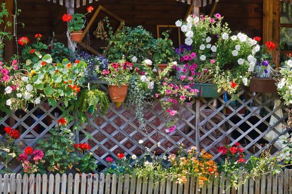 Изгородь для цветов на даче
