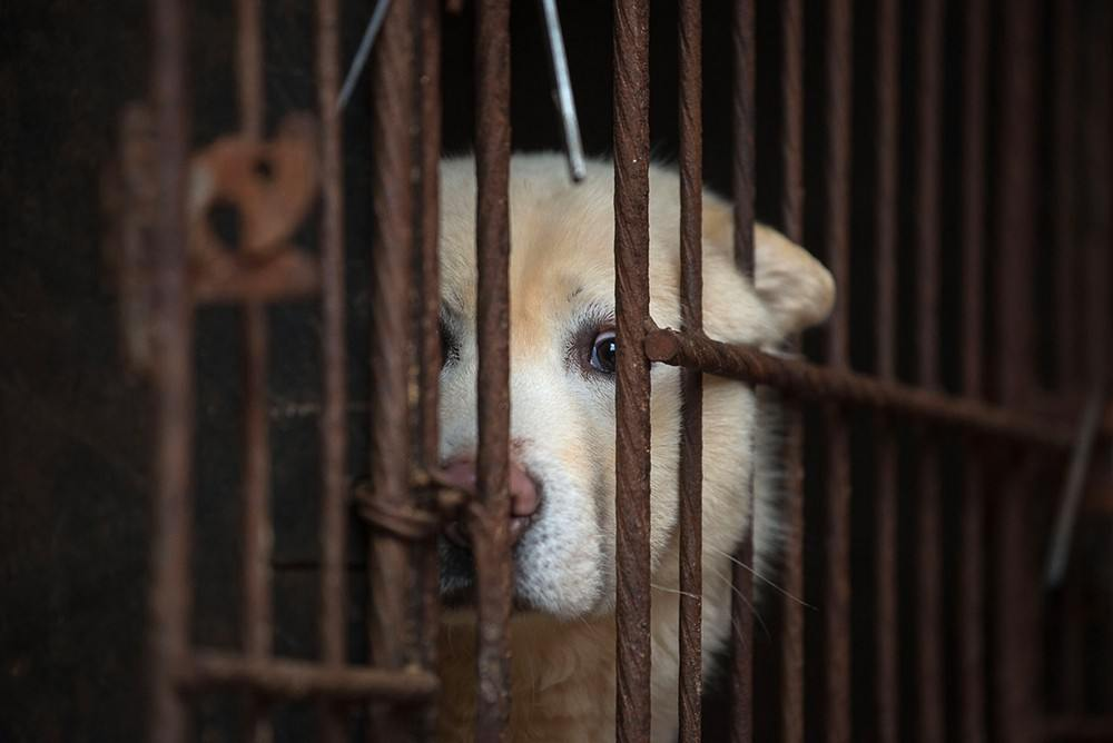 ban on eating cats and dogs Taiwan has banned the consumption and sale of cat and dog meat and may publicly release names and pictures of those who don't comply.