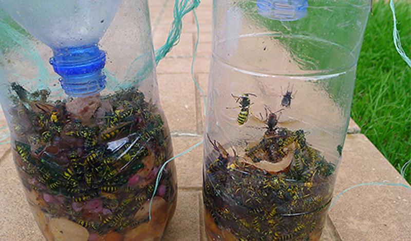 Ловушки для муравьев своими руками и покупные - Вредители 51